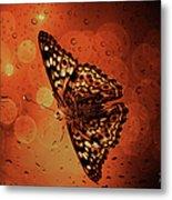 Hackberry Emperor - Asterocampa Celtis Metal Print
