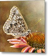 Hackberry Emperor Butterfly 2 Metal Print