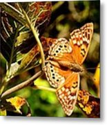 Hackberry Emperor Butterfly Metal Print