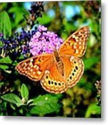 Hackberry Emperor Butterfly On Flowers Metal Print