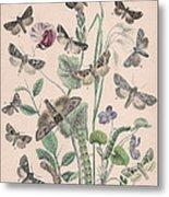 Hadenidae - Xylinidae Metal Print