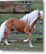 Haflinger Stallion Metal Print