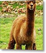 Hairy Brown Gumby Aka Brown Alpaca Metal Print