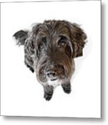 Hairy Dog Photographic Caricature Metal Print