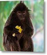 Hairy Monkey Metal Print