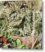 Hairy Moss Fairy Metal Print