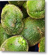 Hairy Peary Chayote Squash By Diana Sainz Metal Print