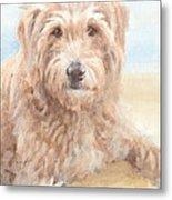 Hairy Sheepdog Watercolor Portrait Metal Print