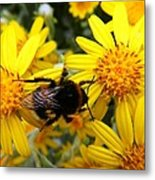 Hairy Visitor Metal Print
