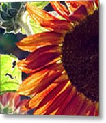 Half Of A Sunflower Metal Print