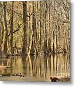 Hall Of Cypress Metal Print