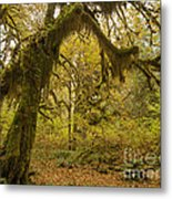 Hall Of Mosses 5 Metal Print