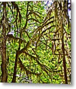 Hall Of Mosses In Hoh Rain Forest In Olympic National Park-washington Metal Print