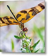 Halloween Banner Dragonfly Metal Print by Shawn Lyte