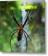 Halloween Spider Metal Print by Annette Allman