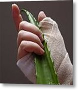 Hand With Bandage Holding Aloe Vera Leaf Metal Print