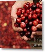 Handful Of Fresh Cranberries Metal Print
