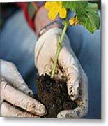 Hands Planting Plant Metal Print