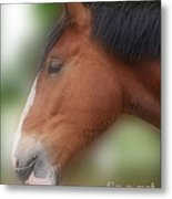Handsome Bay Shire Horse Metal Print