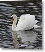 Handsome He Glides Metal Print