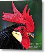 Handsome Rooster Metal Print