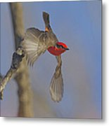 Handsome Vermillion Off The Limb Metal Print