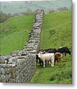 Hangin Out At Hadrians Wall England Scotland Metal Print