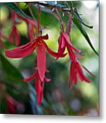 Hanging Asian Lillies Metal Print