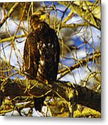 Hanging By The River  Metal Print