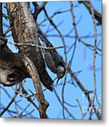 Hanging In The Park Metal Print
