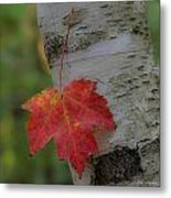Hanging In There Metal Print