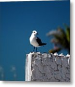 Hanging Out In Key West 2 Metal Print