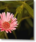 Hanging Out With A Flower Metal Print