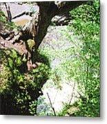 Hanging Tree Metal Print