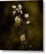 Happily Ever Aster Metal Print