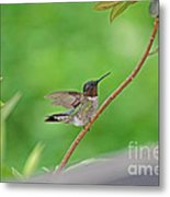 Happy As A Hummer Metal Print
