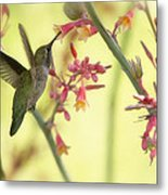 Happy As A Hummingbird  Metal Print