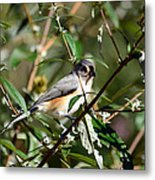 Happy As A Titmouse Metal Print
