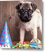 Happy Birthday Cute Pug Puppy Metal Print by Edward Fielding