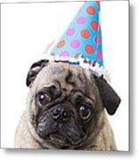 Happy Birthday Pug Card Metal Print