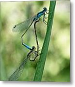 Happy Couple Metal Print