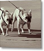 Happy Dogs 14 Metal Print