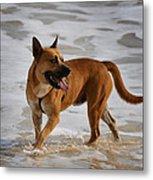 Happy Dogs 5 Metal Print