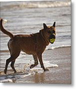 Happy Dogs 7 Metal Print