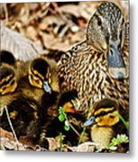 Happy Family Metal Print by Frozen in Time Fine Art Photography