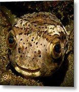 Happy Fish Metal Print by Craig Dietrich