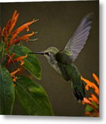 Happy Little Hummingbird  Metal Print