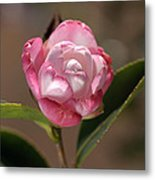 happy mother's day - Camellia Metal Print