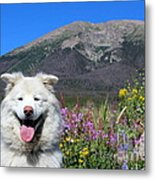 Happy Mountain Dog Metal Print