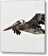 Happy Pelican Metal Print